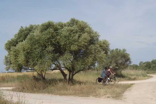 Unspoiled Central Mallorca Cycle