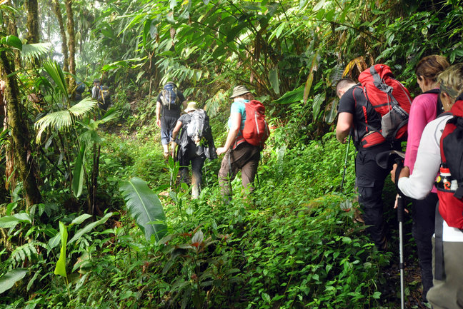 Coast to Coast Rainforest Trek