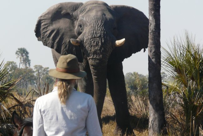 Coming face to face with an elephant