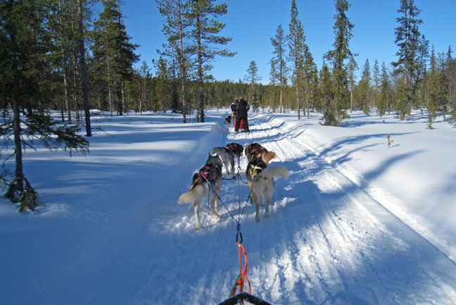 Husky Sledding Arctic Adventure