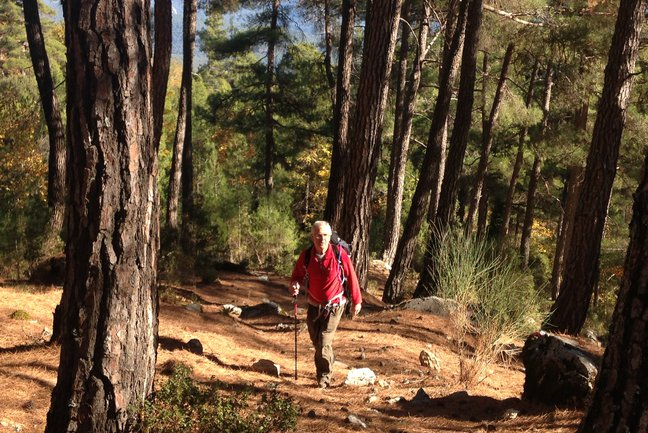 Walking up through the pine forest from Yayla Kuzdere