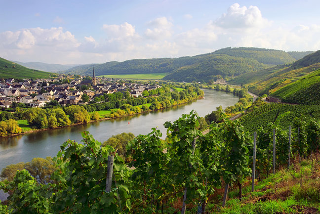 Meanders of the Moselle Walk