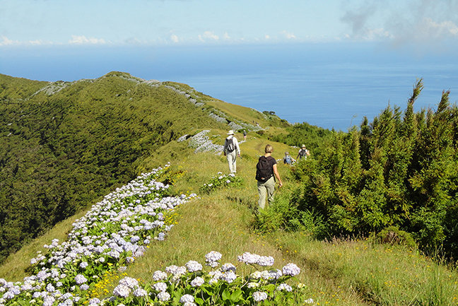 Walking and Whales on the Azores
