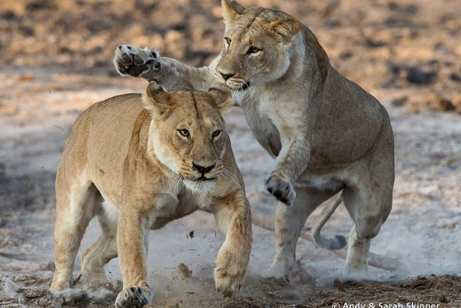 Botswana Photographic Safari