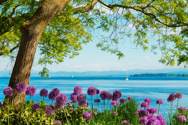Shores of Lake Constance