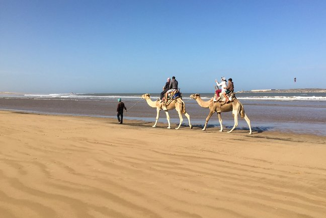 Camel rides on the beach Essaouira