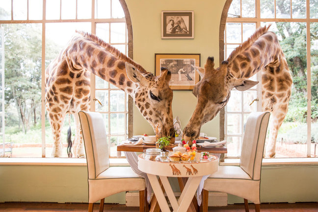 Kenya Luxury Safari