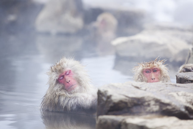 Japan Onsen and  Snow Monkeys