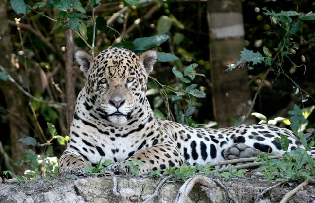 Brazil wildlife tour  Pantanal