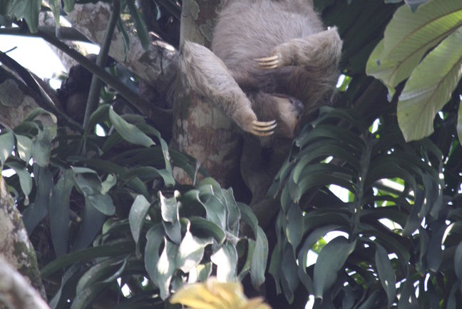 Costa Rica Sloths & Monkeys
