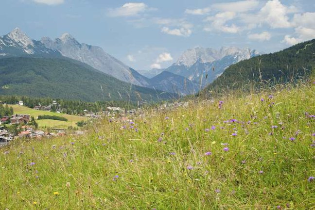 Flower meadows above Leutasch
