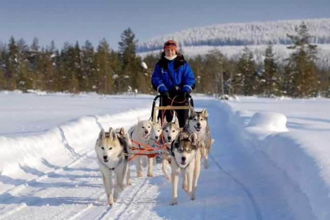 Lapland Activity Week