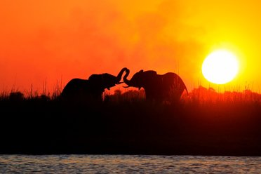 Tanzania safaris wild elephants at sunset