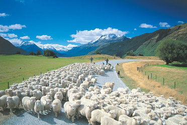independent touring holidays in New Zealand offer unique experiences