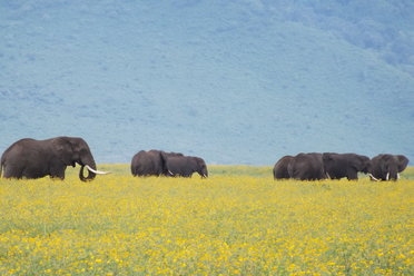 Tanzania offers a range of excellent safari options!