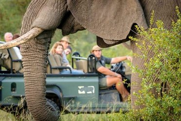 SAFARI HOLIDAYS
