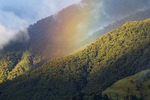 Protecting Ecuadorian Cloudforest with the World Land Trust and EcoMinga